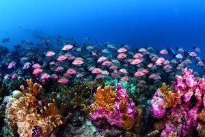 Featured Photo Courtesy Imran Ahmad – Seychelles Tourism Board-min-min